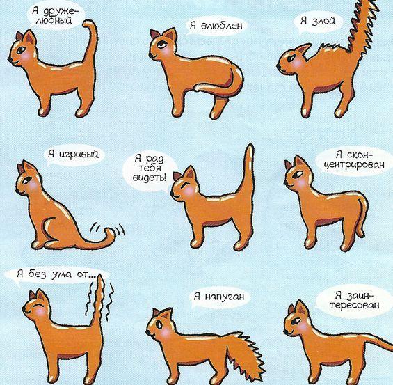 Хвост для кошки