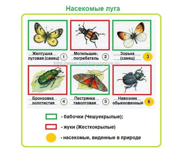 задание по окружающему миру для 3 класса. Определите насекомых луга
