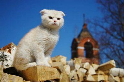 котики в монастыре