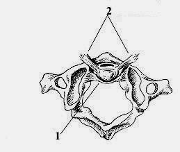 Сустав крювелье фото артроз суставов ступни ног