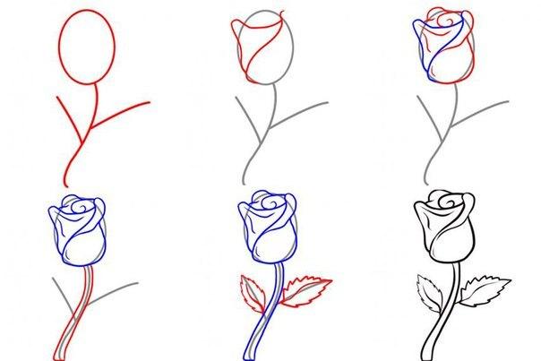 Нарисовать розу пошагово