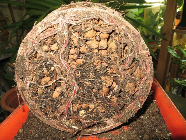 Что используют для дренажа растений