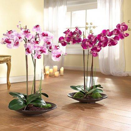 Не долго цветет орхидея