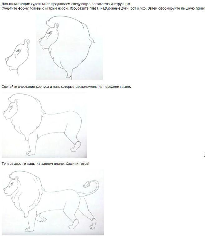 Как нарисовать льва поэтапно карандашом мастер-класс для детей