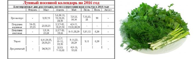 Лунный календарь на посев петрушки