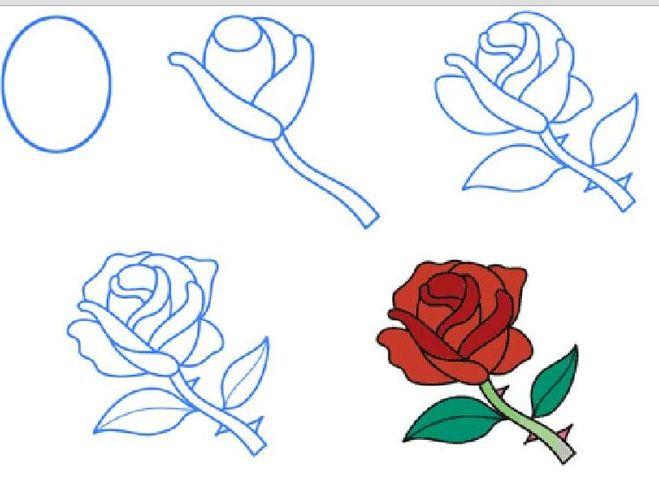 как нарисовать цветы розы по