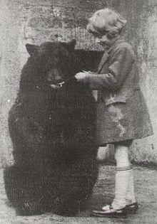 медведица Винни