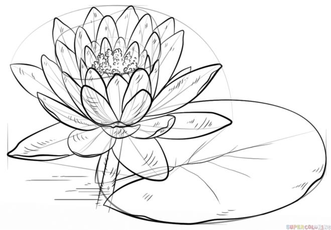 как нарисовать водную лилию 8