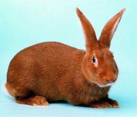 люди рожденные в год кролика под знаком водолея