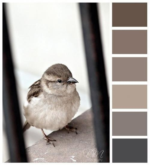 Цвет taupe это какой