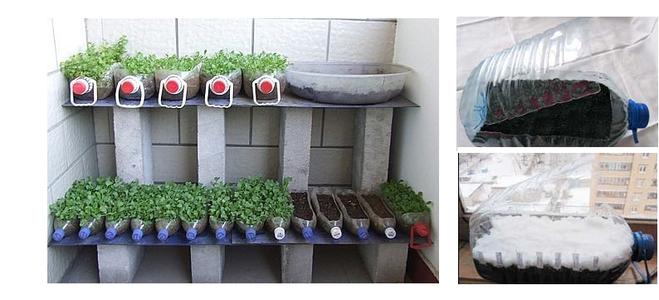 Выращивание огурцов в пластиковых 5 литровых бутылках выращивание 80