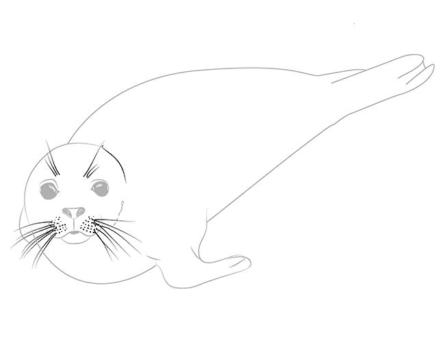 как рисовать тюленя 5