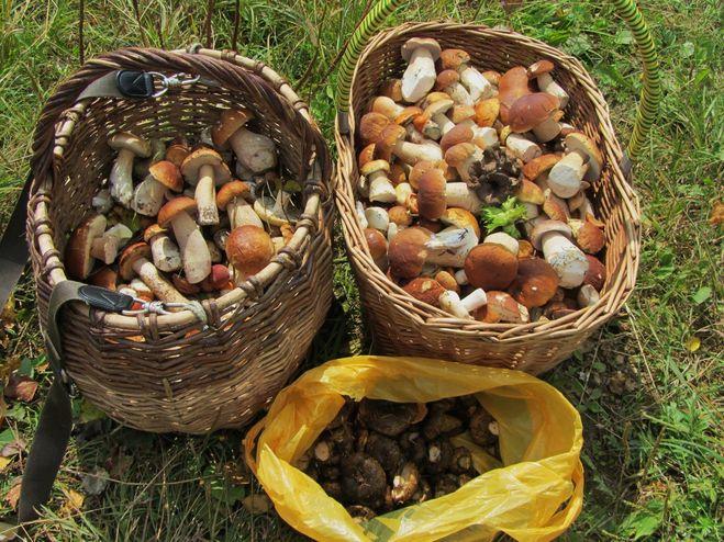 чернушки фото грибы