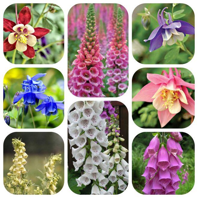 Садовые цветы похожие на колокольчики