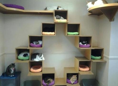 Что можно сделать из коробки для кошки своими руками