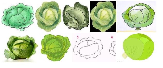 Как поэтапно нарисовать капусту