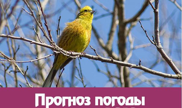 Какой прогноз погоды на весну 2018 года на Урале?