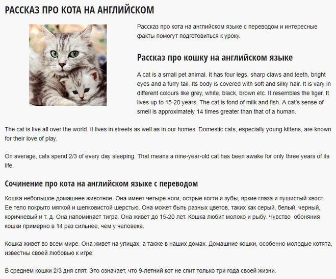Рассказ о кошке на английском 3 класс