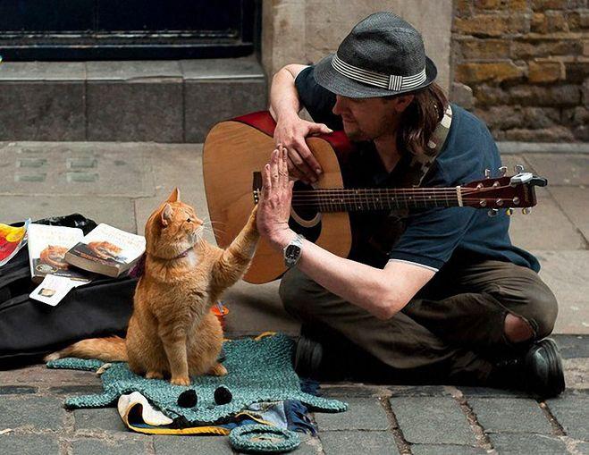 Скачать книгу бесплатно epub уличный кот по имени боб