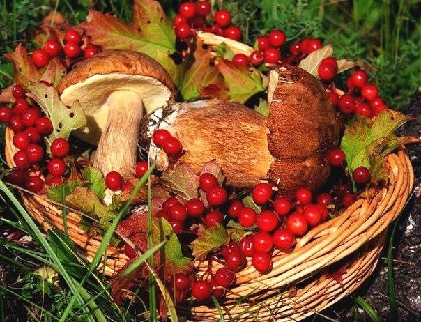 грибы и ягоды в подмосковье