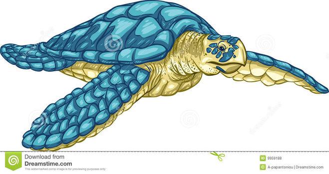 Рисунок черепахи морской