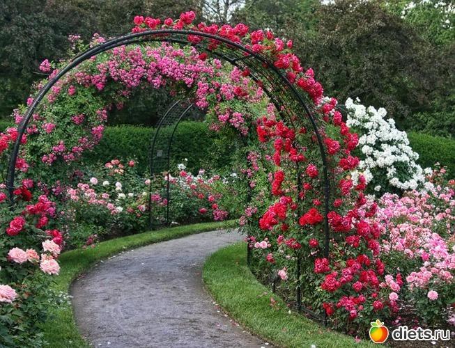 Где посадить цветы на участке фото