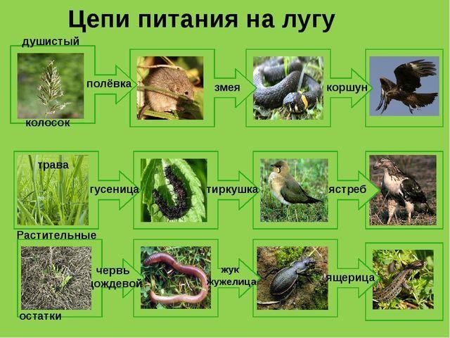 Схема питания лугового сообщества 4 класс
