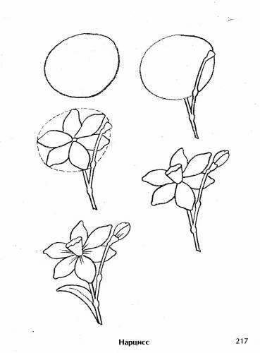 Рисунок цветка карандашом пошагово