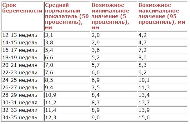 какого размера должен быть член Кировград