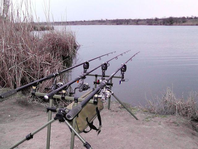 карповая рыбалка род под