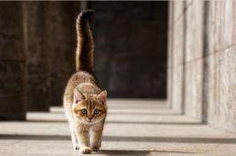 у кота хвост знаком вопроса