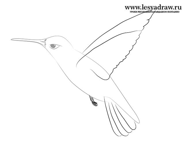 Колибри у цветка как нарисовать