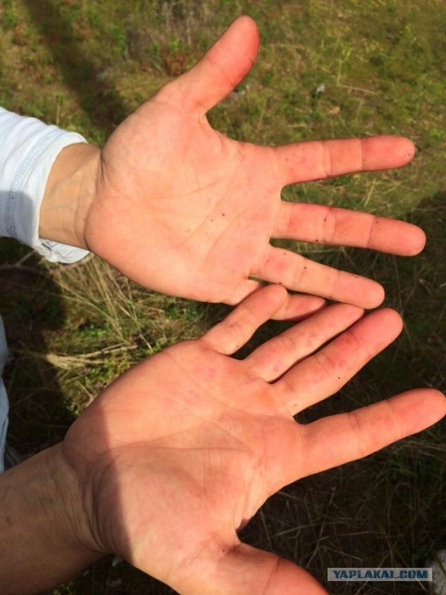 Чем отмыть чернику с рук