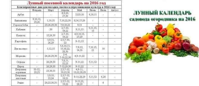 Посев томатов по календарю