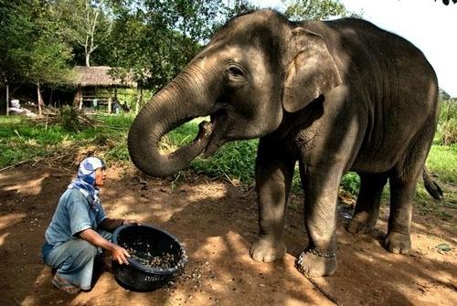 текст при наведении - слона кормят кофейными зёрнами